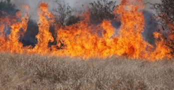 Louisiana DR makes urgent plea for hay for Midwest and Texas ravaged by wildfires