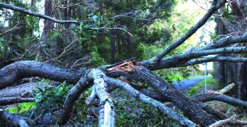 Carey Association seeking help with storm cleanup