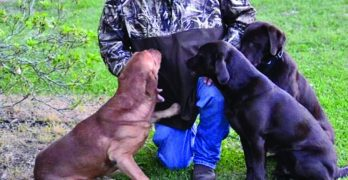 Ministry highlights obedience to God using retrievers